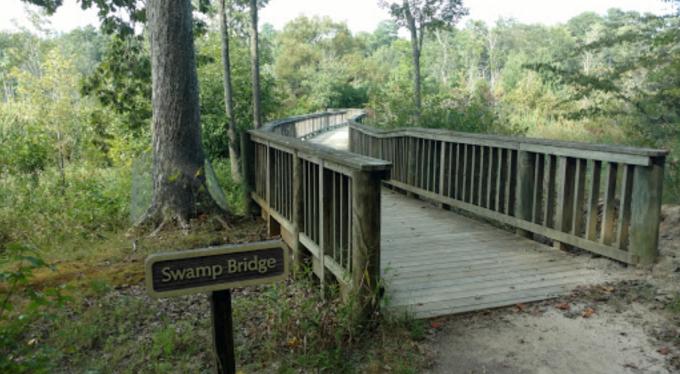 swampbridge